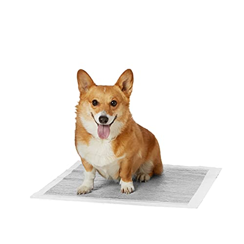 Amazon Basics Odor-Control Carbon Pet Dog and Puppy Training Pads - Pack of 80, Regular (22 x 22 Inches)