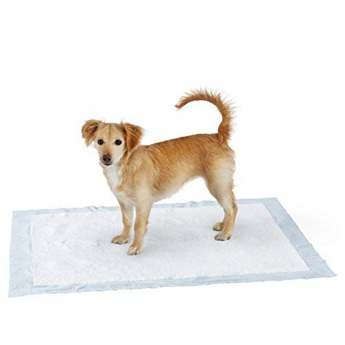 Amazon Basics Dog and Puppy Pads, Leak-proof 5-Layer Pee Pads with Quick-dry Surface for Potty Training, X-Large (28 x 34 Inches) - Pack of 40