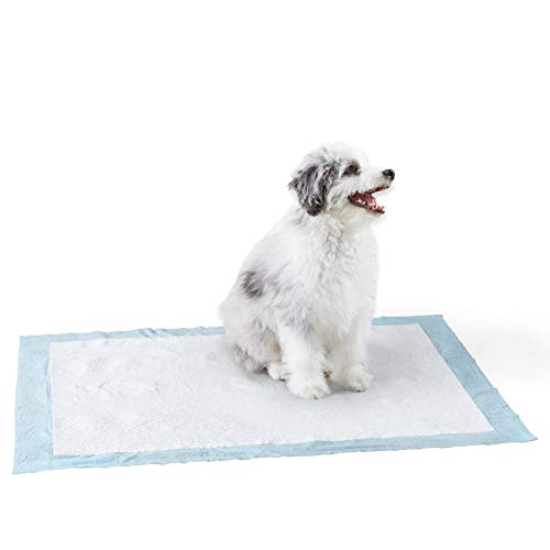 Amazon Basics Dog and Puppy Pads, Heavy Duty Absorbency Pee Pads with Leak-proof Design and Quick-dry Surface for Potty Training, X-Large (28 x 24 Inches) - Pack of 50