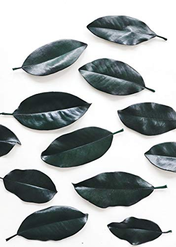 Afloral Bulk Preserved Magnolia Leaves in Dark Green- 2lb Box - Ships Alone