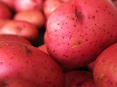 5lb Pack of Seed Potatoes - Variety Red Norland by Honeyman Farms