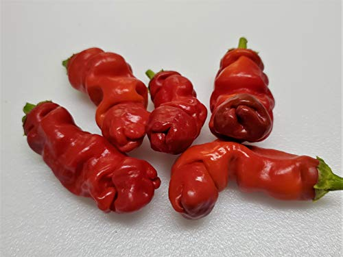 Peter Pepper Red Hot Pepper 10+ Seeds