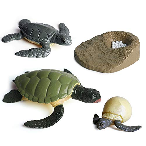 EOIVSH Life Cycle Set of Turtle, Realistic Hand-Painted Sea Creature Turtle Figure Toy Learning & Educational Ocean Animal Science Toys for Children Toddlers