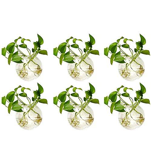 Nuptio 6 Pcs Wall Hanging Planters Glass Planter Terrariums Round Glass Plant Pot - Water Planting Vases Air Flower Vase Plant Terrariums Plant Container 4 Inches Diameter (6 Pcs)