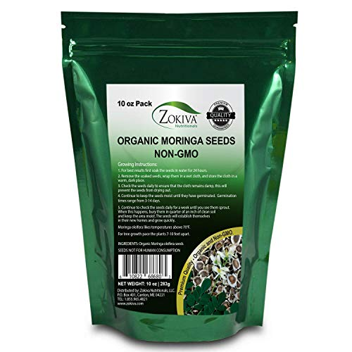 Zokiva Nutritionals - Moringa Seeds Non-GMO Organic - Premium Quality PKM1 Semillas De Moringa Seeds for Planting - Malunggay Drumstick Tree - 10 oz Pack in Resealable Stand Up Pouch