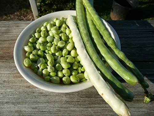 Zipper Cream Cowpea - Large, easy-shelling cream pea - 2-3 foot bushy plants!!!(200 - Seeds)