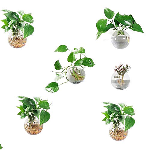 Orimina Pack of 6 Glass Planters Wall Hanging Planters Round Glass Plant Pots Hanging Air Plant Pots Flower Vase Air Plant Terrariums Wall Hanging Plant Container, 12 cm Diameter ¡