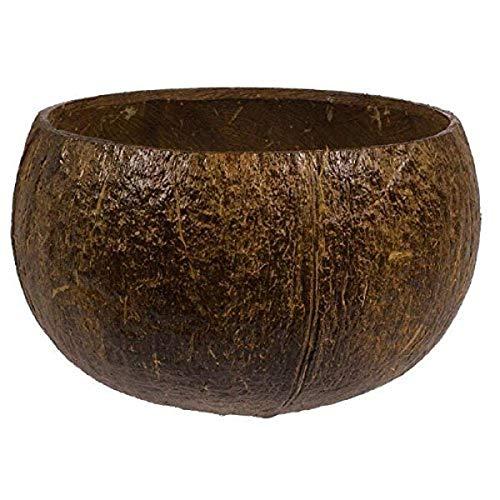 Authentic Coconut Party Cup, 18 oz