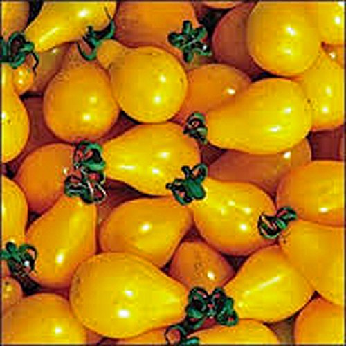 Tomato,Yellow PEAR Tomato Seed, Heirloom, Non-GMO, 25+ Seeds, Tasty, Great for Salads