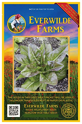 Everwilde Farms - 1000 Red Deer Tongue Lettuce Seeds - Gold Vault Jumbo Seed Packet