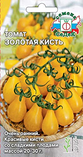 Russian Tomato Golden Brush (Very Early, Hothouse, ​​indet, pear-Shaped, Gold-Yellow, 20-30g, Beautiful Brush). Euro 0.2