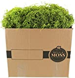 Bella Moss 140901070 Preserved Spanish Bulk Moss, Green