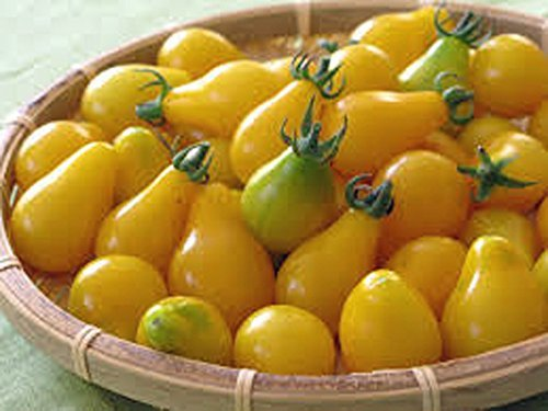 Tomato,Yellow PEAR Tomato Seed, Heirloom, Non-GMO, 100 Seeds, Tasty, Great for Salads