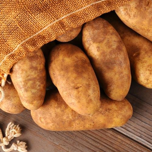 Simply Seed - Russet Burbanks - Naturally Grown Seed Potatoes - 5 LBS - Ready for Spring Planting