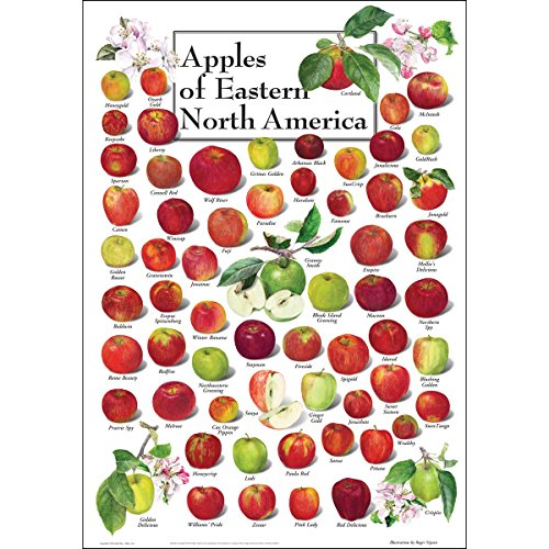 Earth Sky + Water Poster - Apples of Eastern North America