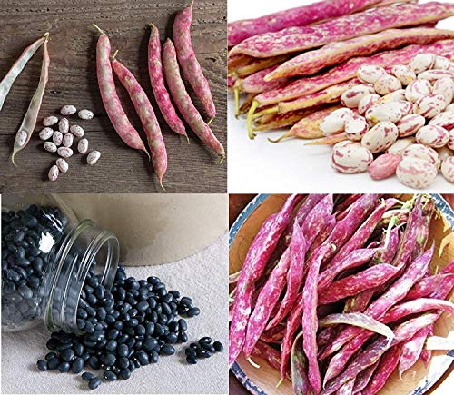 David's Garden Seeds Collection Set Bean Dry 5445 (Multi) 4 Varieties 400 Non-GMO, Open Pollinated Seeds
