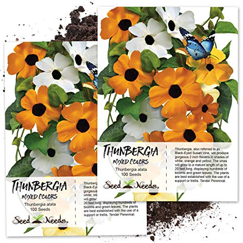 Seed Needs, Black Eyed Susan Vine Mix (Thunbergia alata) Twin Pack of 100 Seeds Each