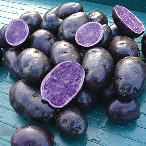 Simply Seed - Purple Majesty - Naturally Grown Seed Potatoes - 5 LB- Ready for Spring Planting