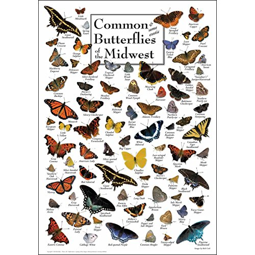 Earth Sky + Water Poster - Common Butterflies of The Midwest